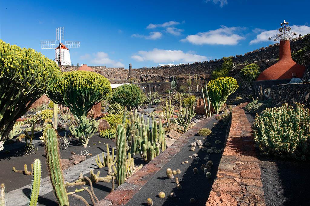 El jard n de cactus premiado en italia y canad for Jardin jardin 2017