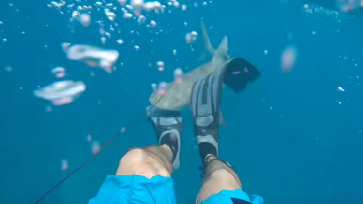 Un tiburón atacando a una persona