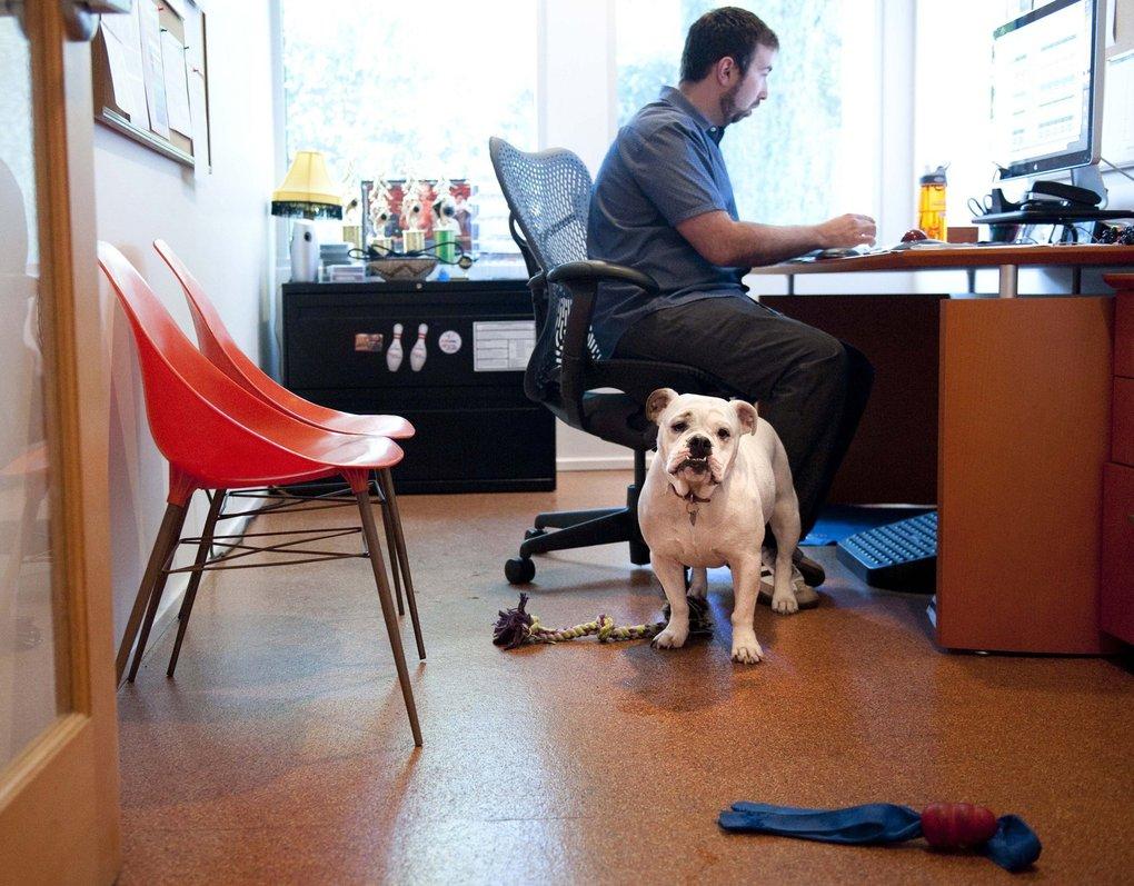 Perro en una oficina