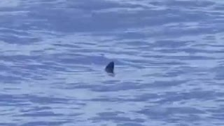 Un tiburón en el mar