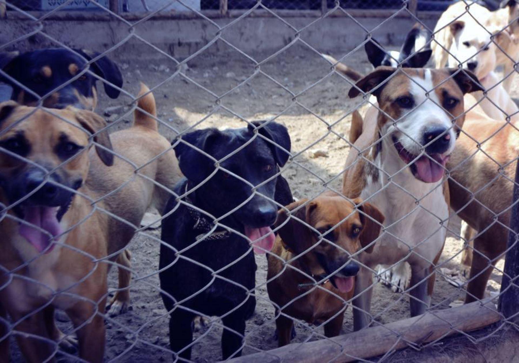 El 25% de los animales abandonados en Santa Cruz de Tenerife se llevan a albergues