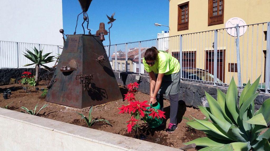 El Ayuntamiento de Icod de los Vinos acomete la siembra de unas 1.000 flores para embellecer los barrios del municipio