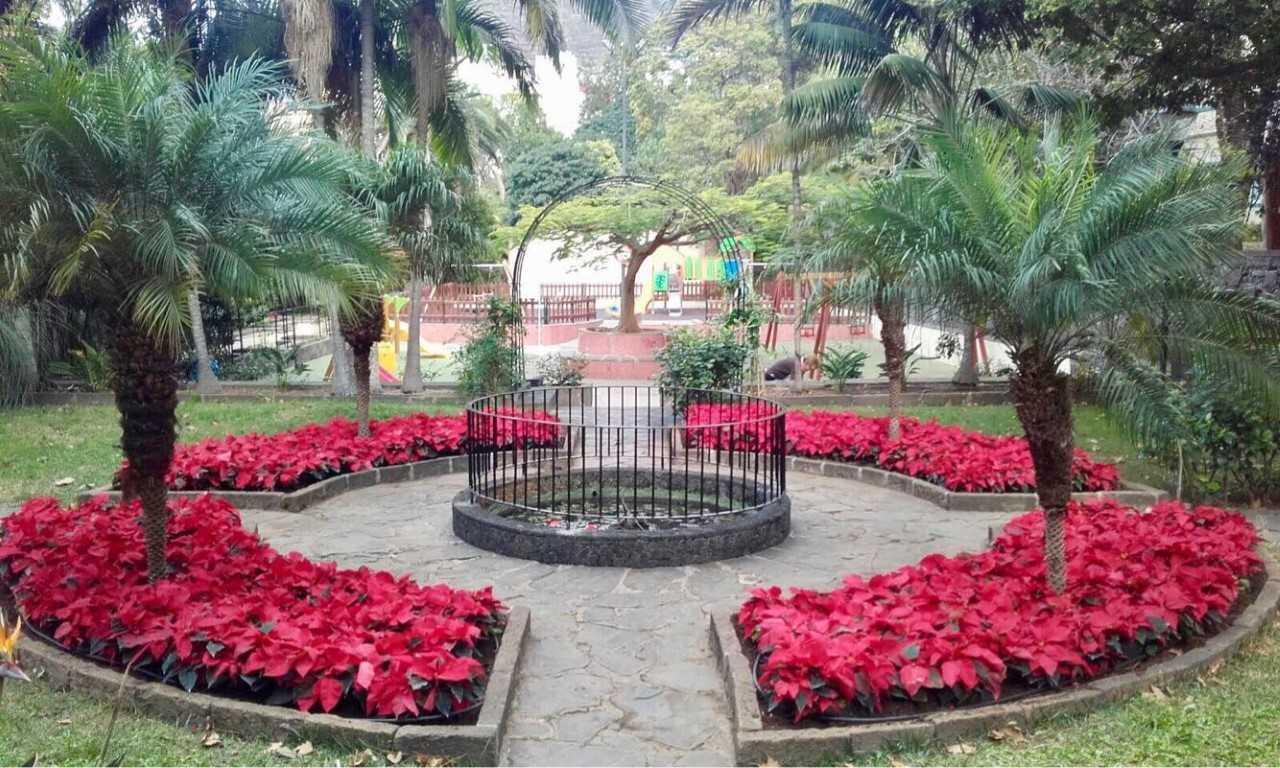 La concejal a de parques y jardines planta cerca de for Plantas ornamentales para parques
