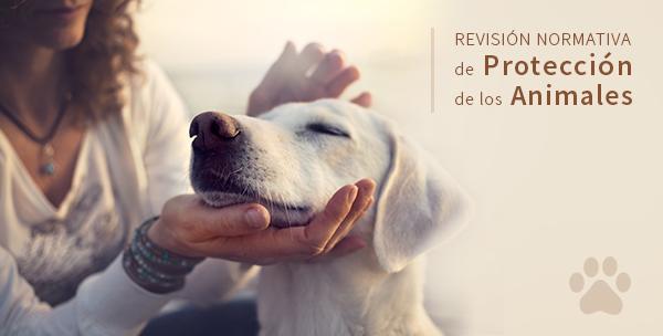 El borrador de Ley de Protección de Animales de Compañía de Canarias recibe casi 9.000 aportaciones