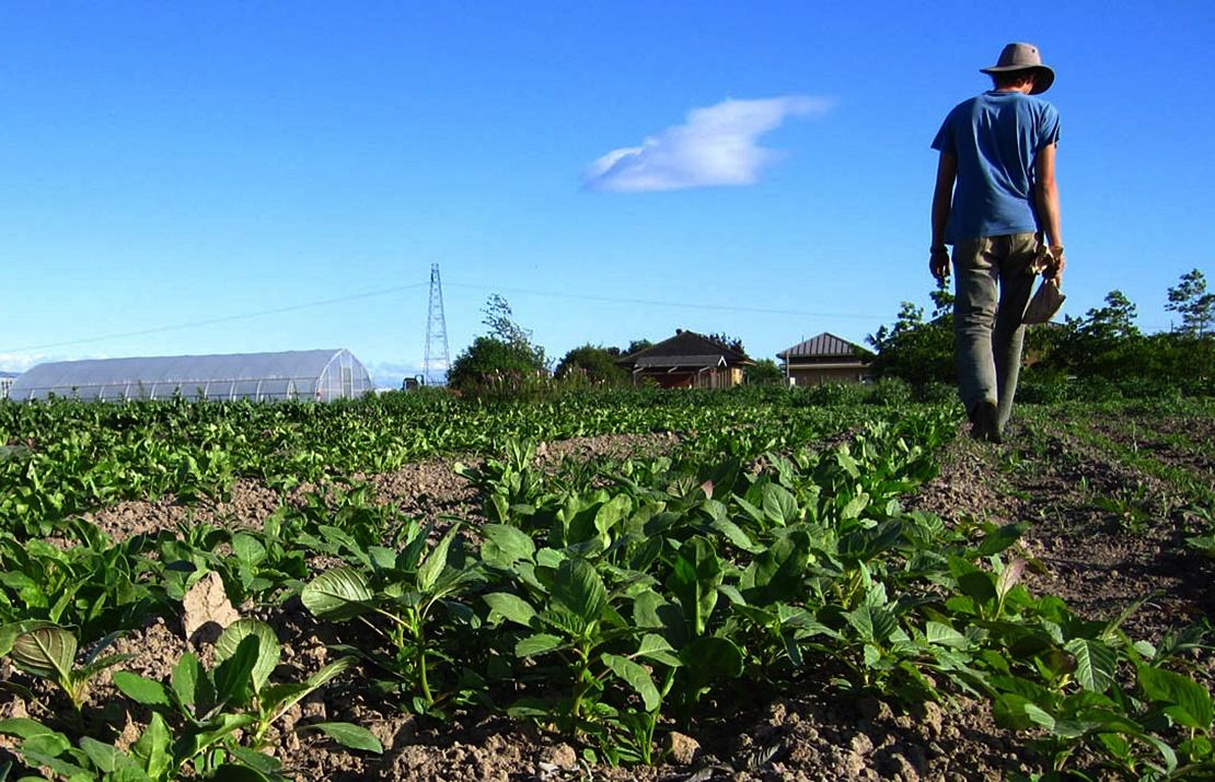 Los agricultores canarios reciben 78 millones del Feaga hasta el 31 diciembre