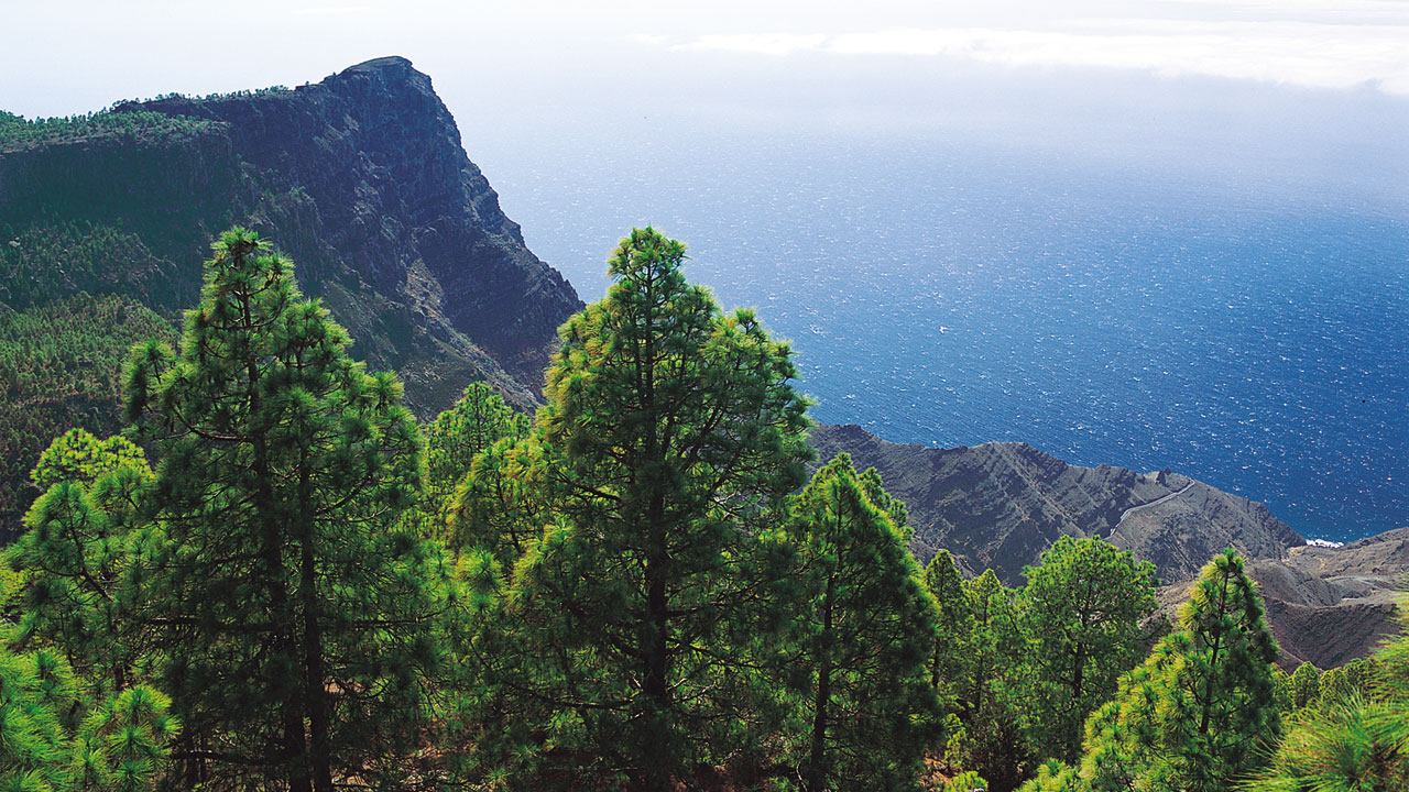 Política Territorial somete a consulta pública la regulación de los planes de gestión forestal sostenible en Canarias