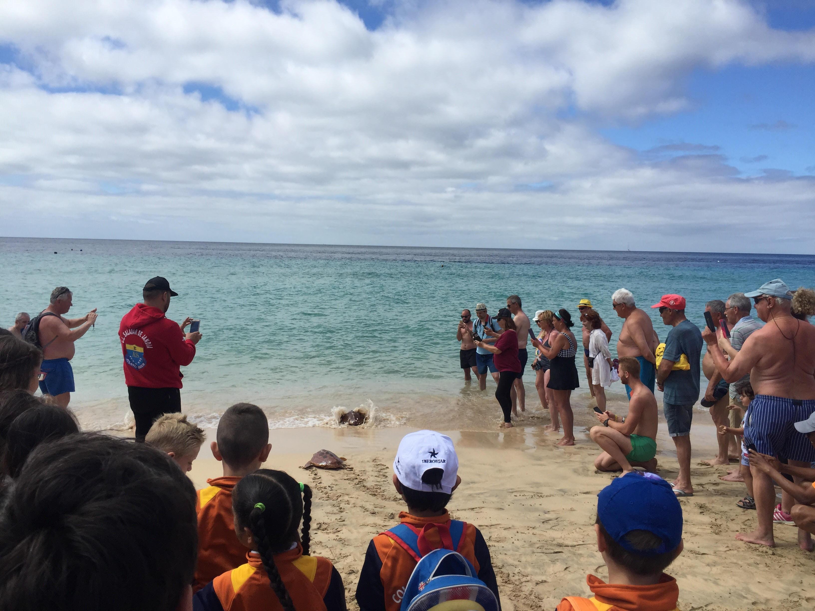 El Cabildo de Fuerteventura devuelve al mar en Jandía a dos tortugas rescatadas