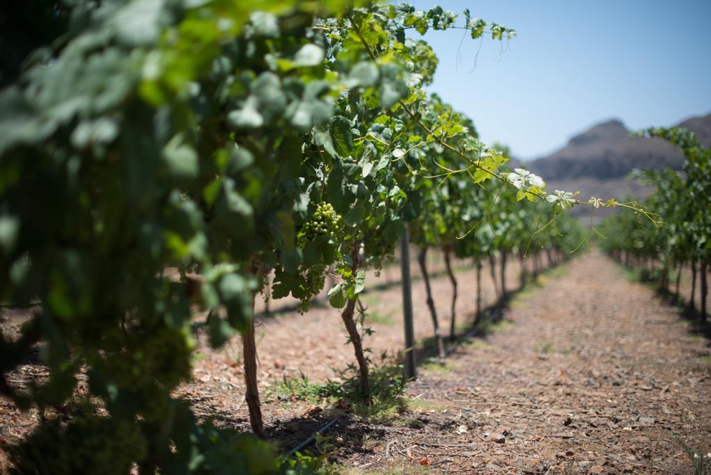Bodegas Tunte obtiene dos Medallas de Oro y una de Plata en el Concurso Mundial de Vinos Extremos de Italia