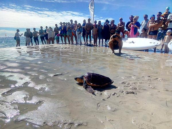Suelta de tortuga en una playa