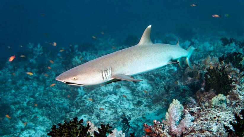 """Decomisan en Perú el cargamento """"más grande"""" de aletas de tiburón"""