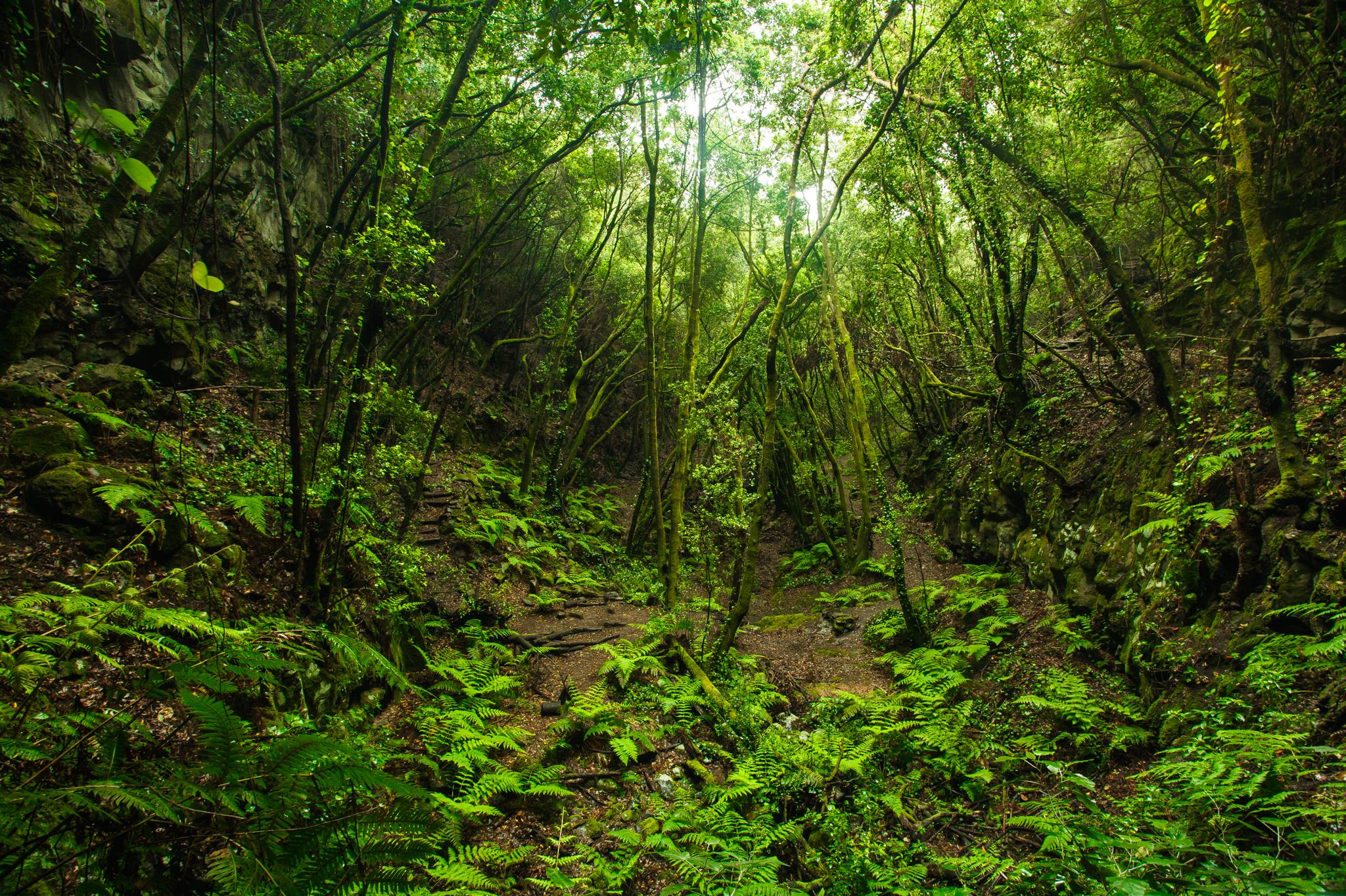 La Palma invertirá 4 millones en medio ambiente con el remanente de Tesorería
