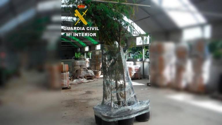 Denunciado un centro jardinero de Fuerteventura por vender plantas invasoras