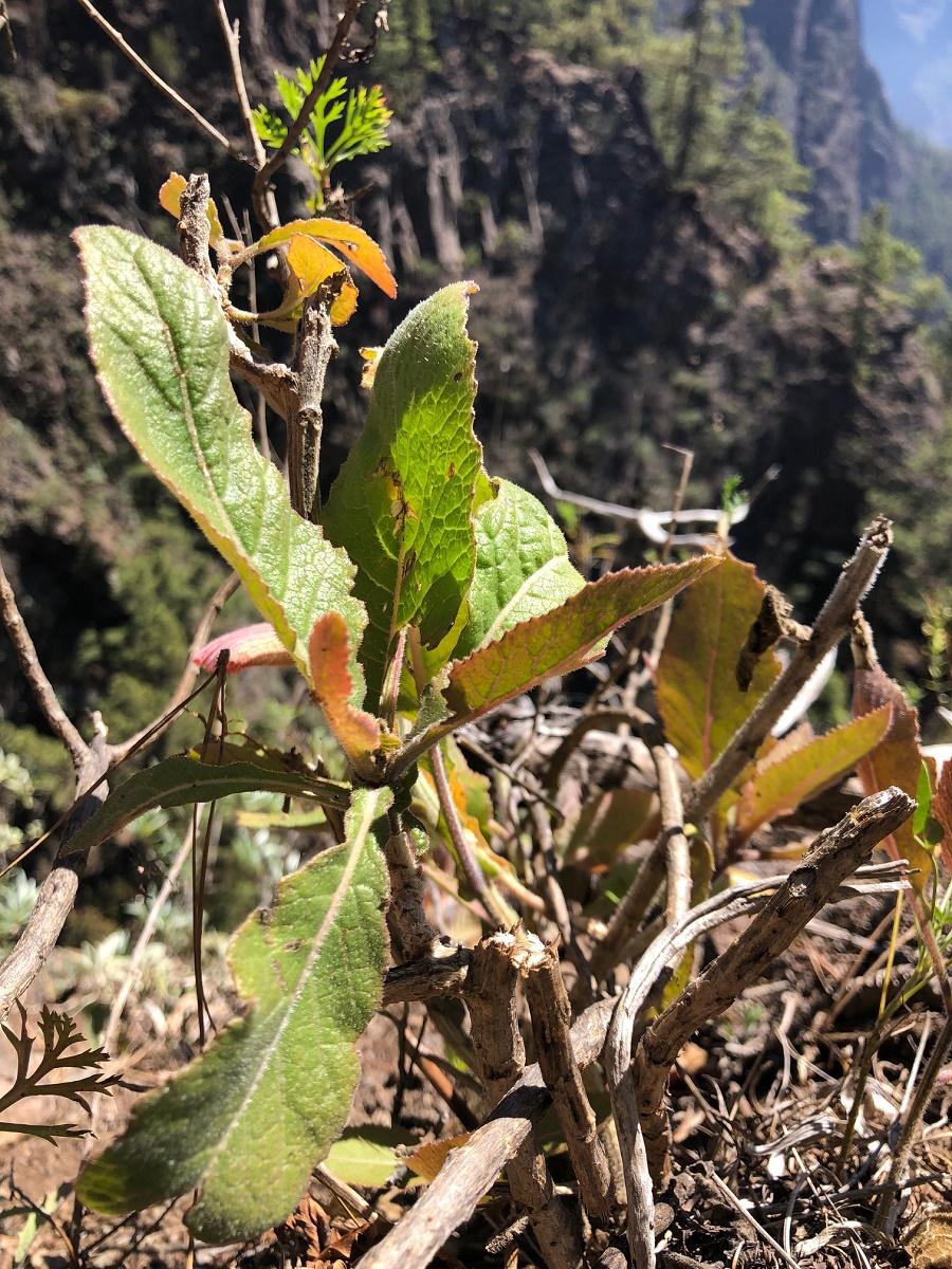 Transición Ecológica descubre nuevas poblaciones de especies vegetales