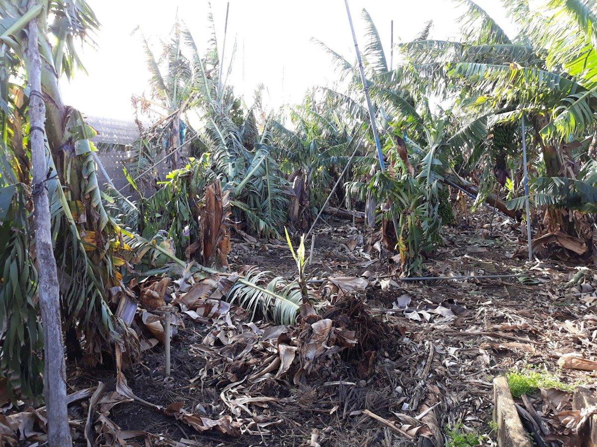 Efectos del temporal en la agricultura en Canarias