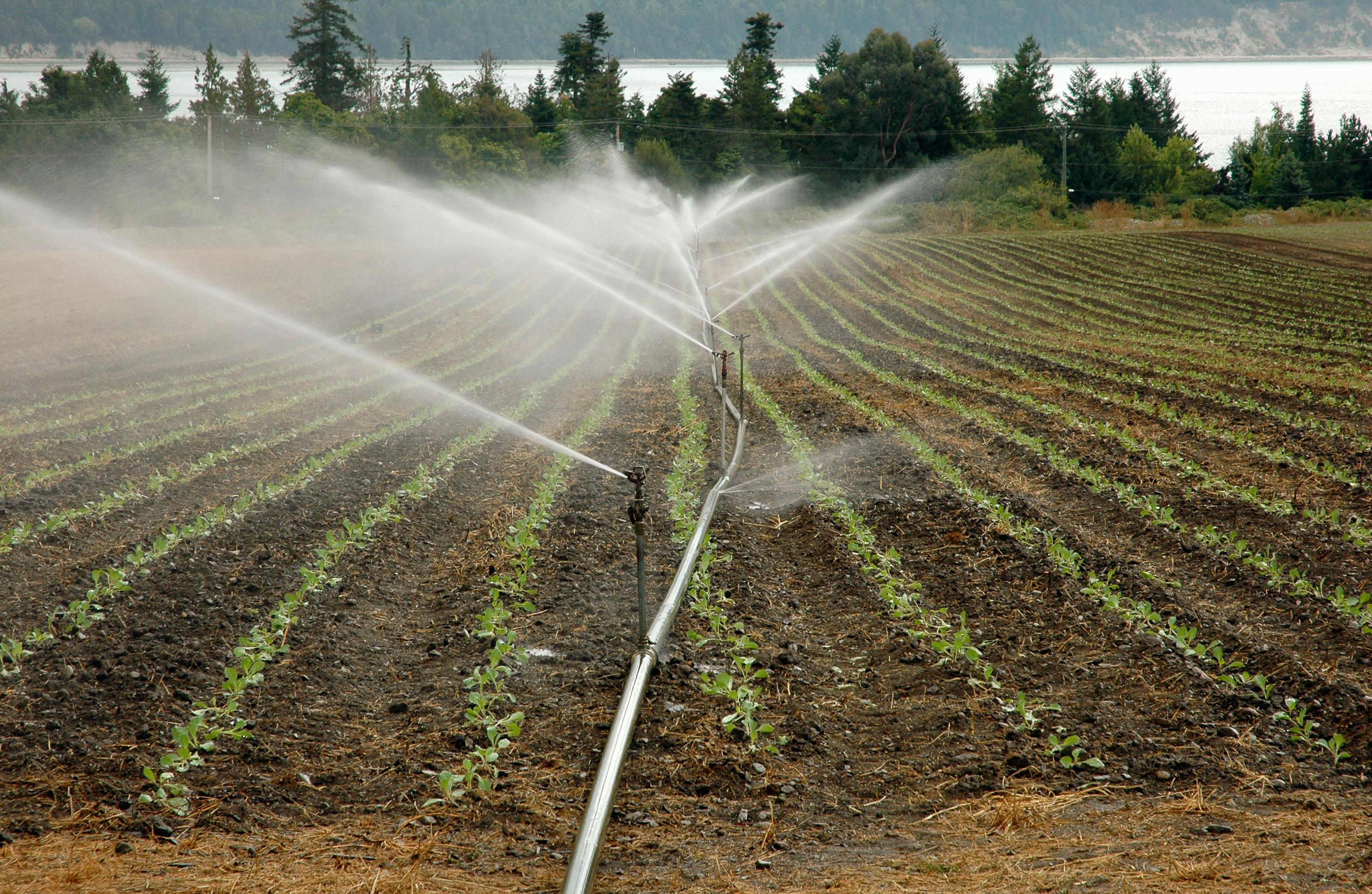 Agua de riego agrícola