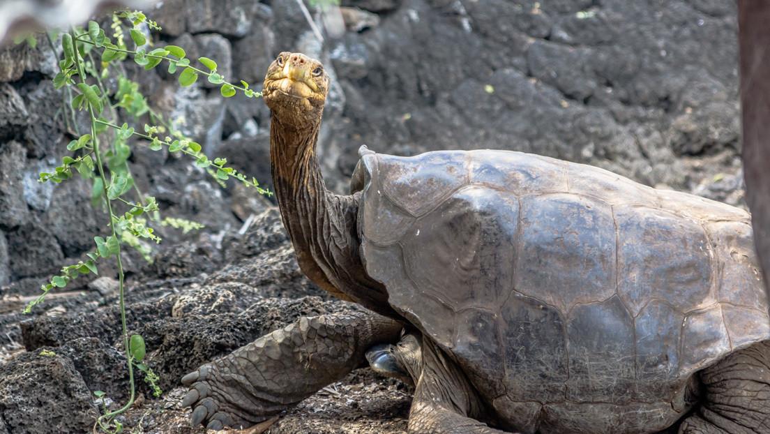 Diego, tortuga que ayudó a evitar la extinción de su especie