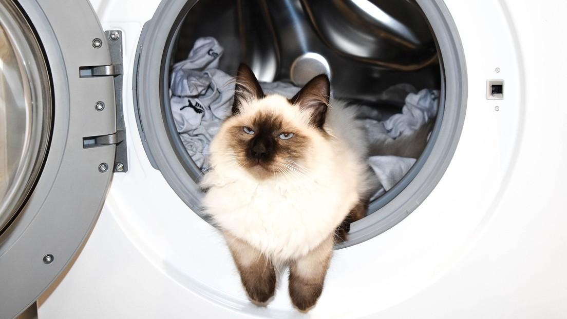 Gato en una lavadora
