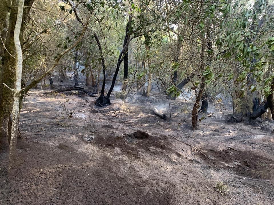 Zona afectada por el conato de incendio de Las Creces., Valle Gran Rey. La Gomera