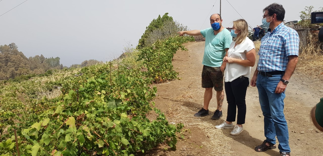 Gobierno de Canarias y Cabildo de La Palma valoran los daños ocasionados por el incendio en los cultivos de Garafía