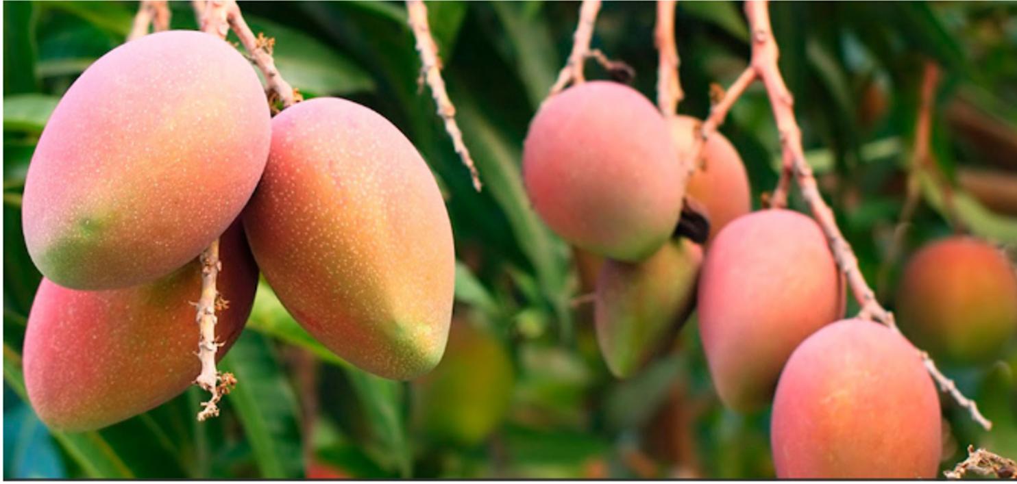 Mangos de Gran Canaria
