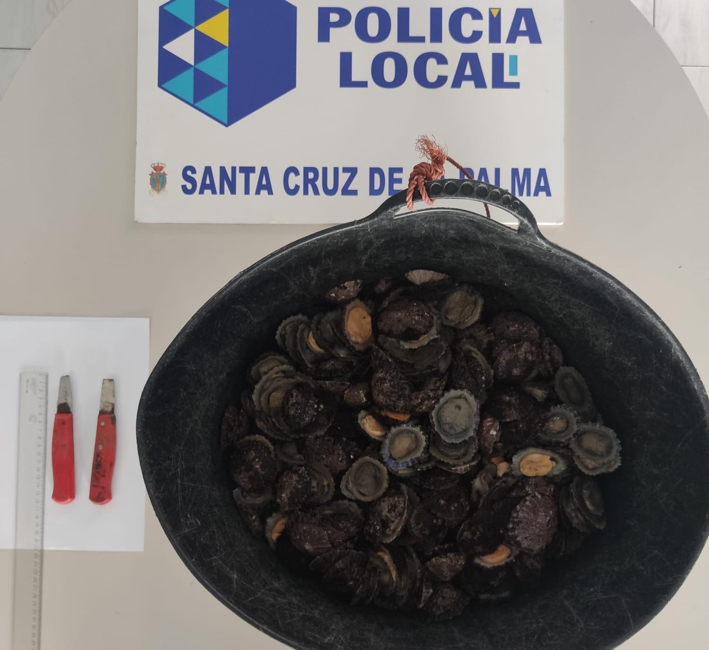 Incautación de lapas. Santa Cruz de La Palma