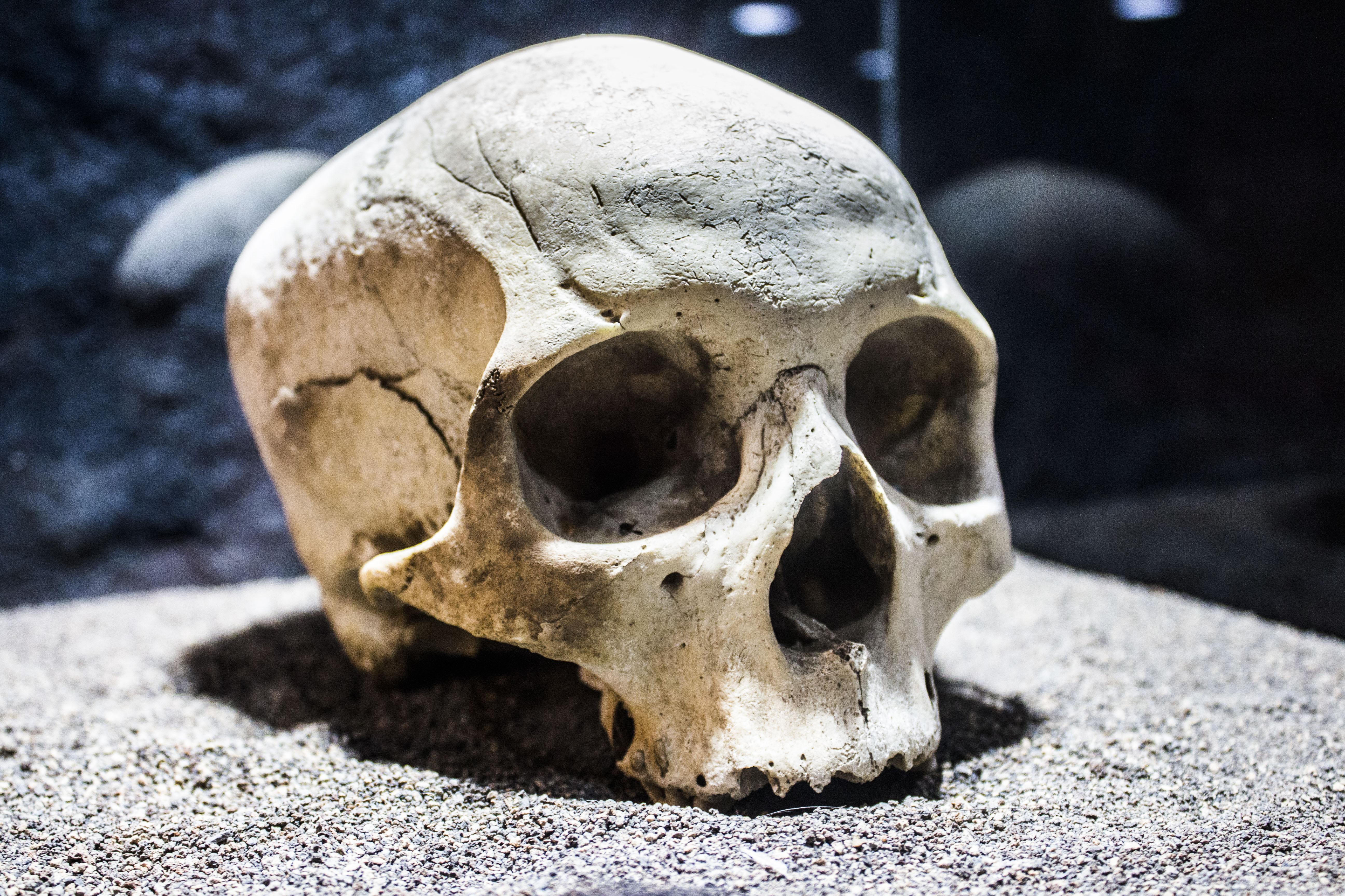 Cráneo de aborigen benahoarita del Museo Arqueológico Benahoarita