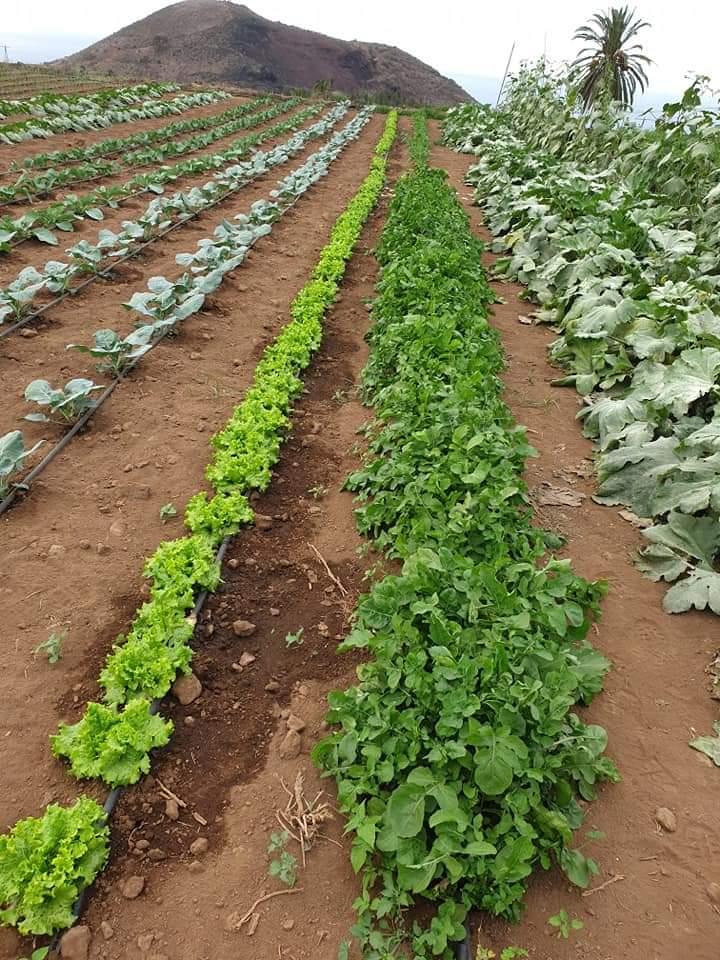 La Orotava. Tenerife. Fincas agrícolas. CanariasNoticias.es