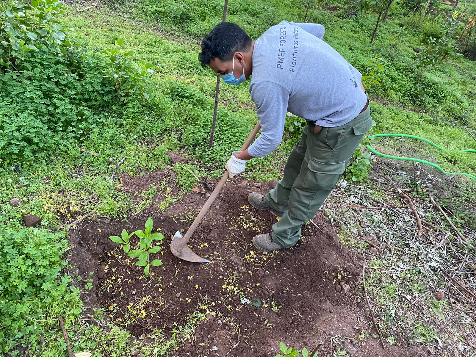 Foresta Plantamos Futuro/ CanariasNoticias.es
