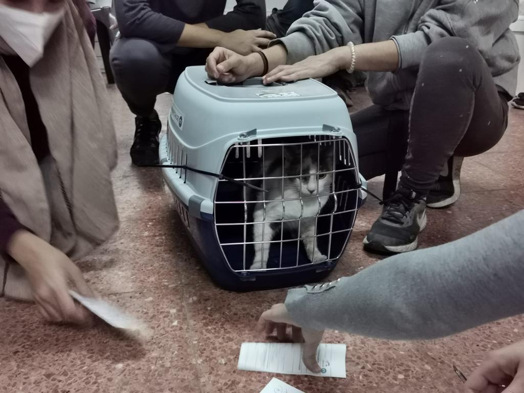 Campaña de castración y esterilización de gatos callejeros en Telde / CanariasNoticias.es