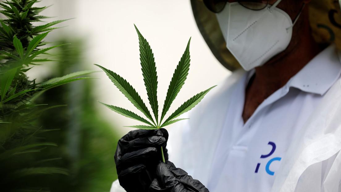 Propiedades terapéuticas del cannabis / Amir Cohen (Reuters)