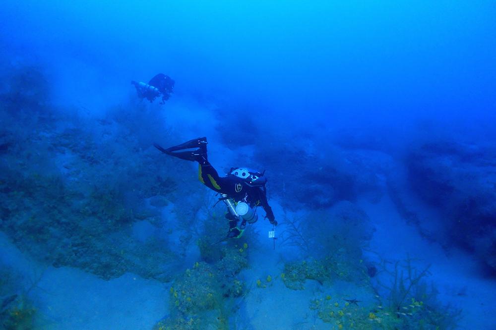 Investigadores de ABAS y LECOB en la linde del bosque del coral negro