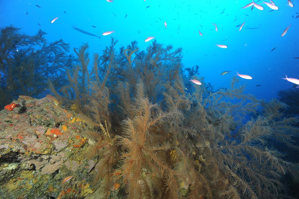 Paisaje de coral negro