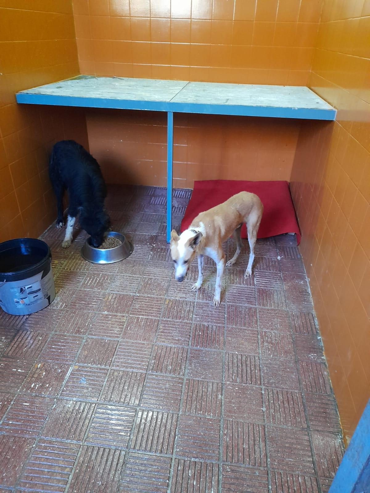 Ayuntamiento de Tacoronte, Refugio Municipal de Animales/ canariasnoticias