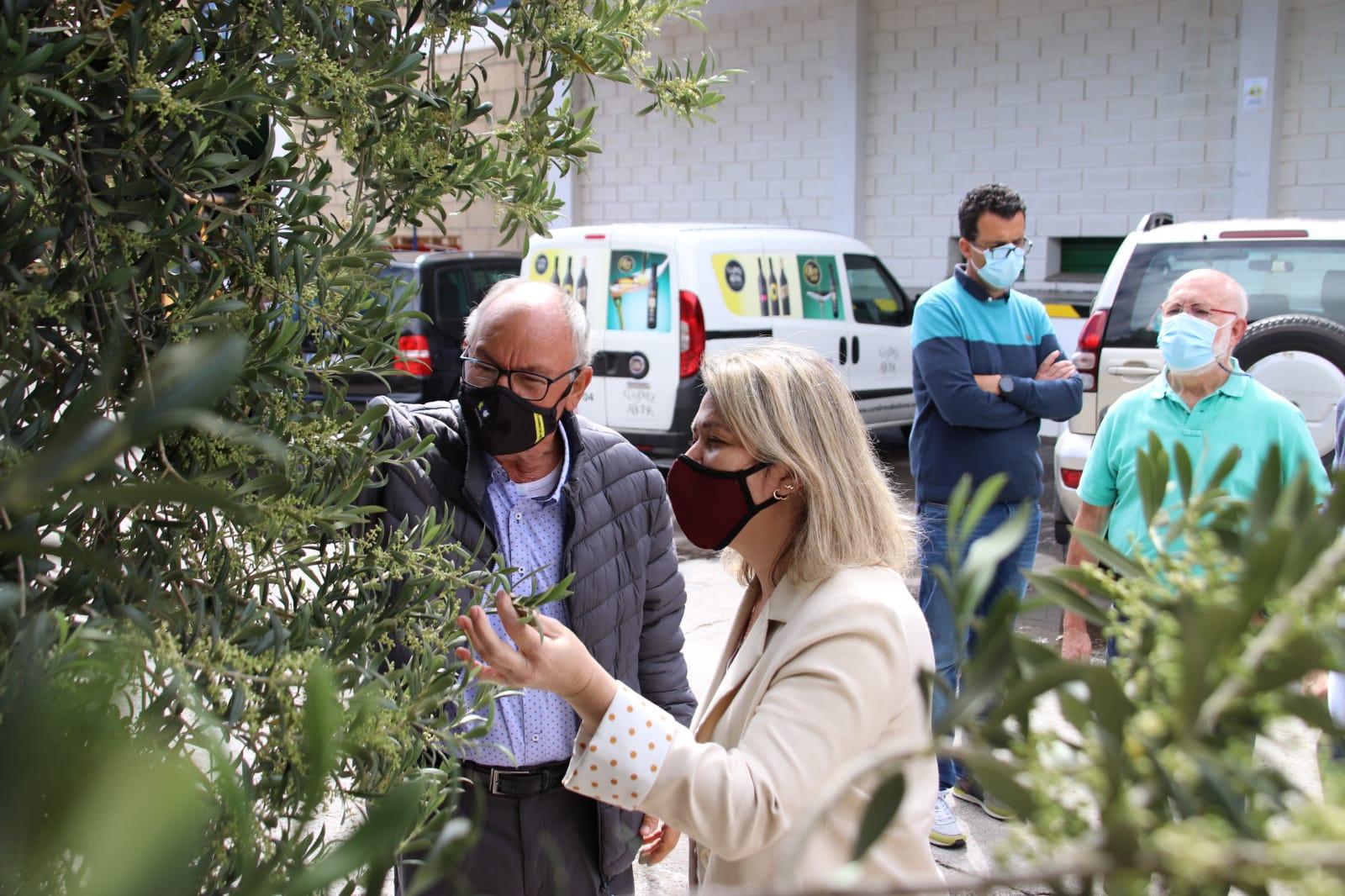 Alicia Vanoostende visita la Cooperativa Cumbres de Abona / CanariasNoticias.es