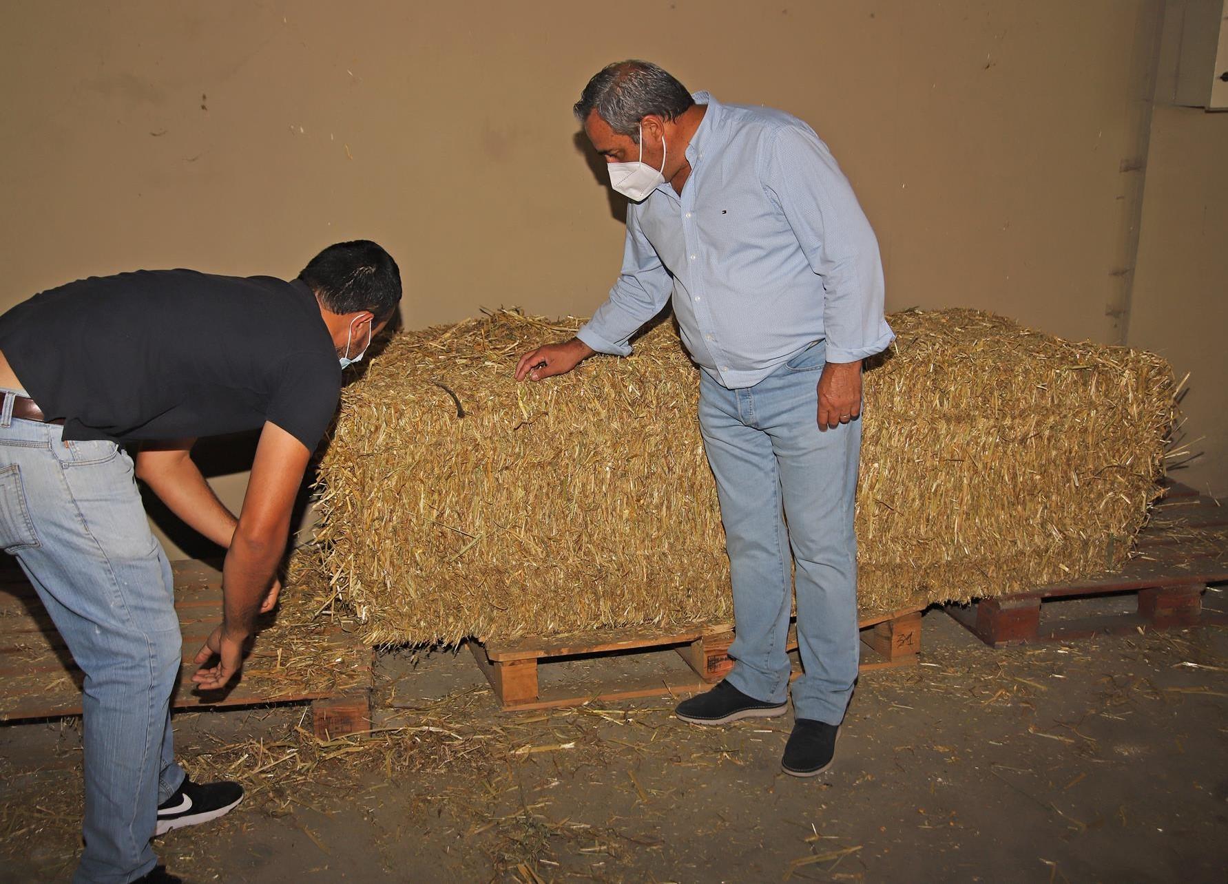 Nave de almacenamiento de forraje ganadero de Teguise (Lanzarote) / CanariasNoticias.es