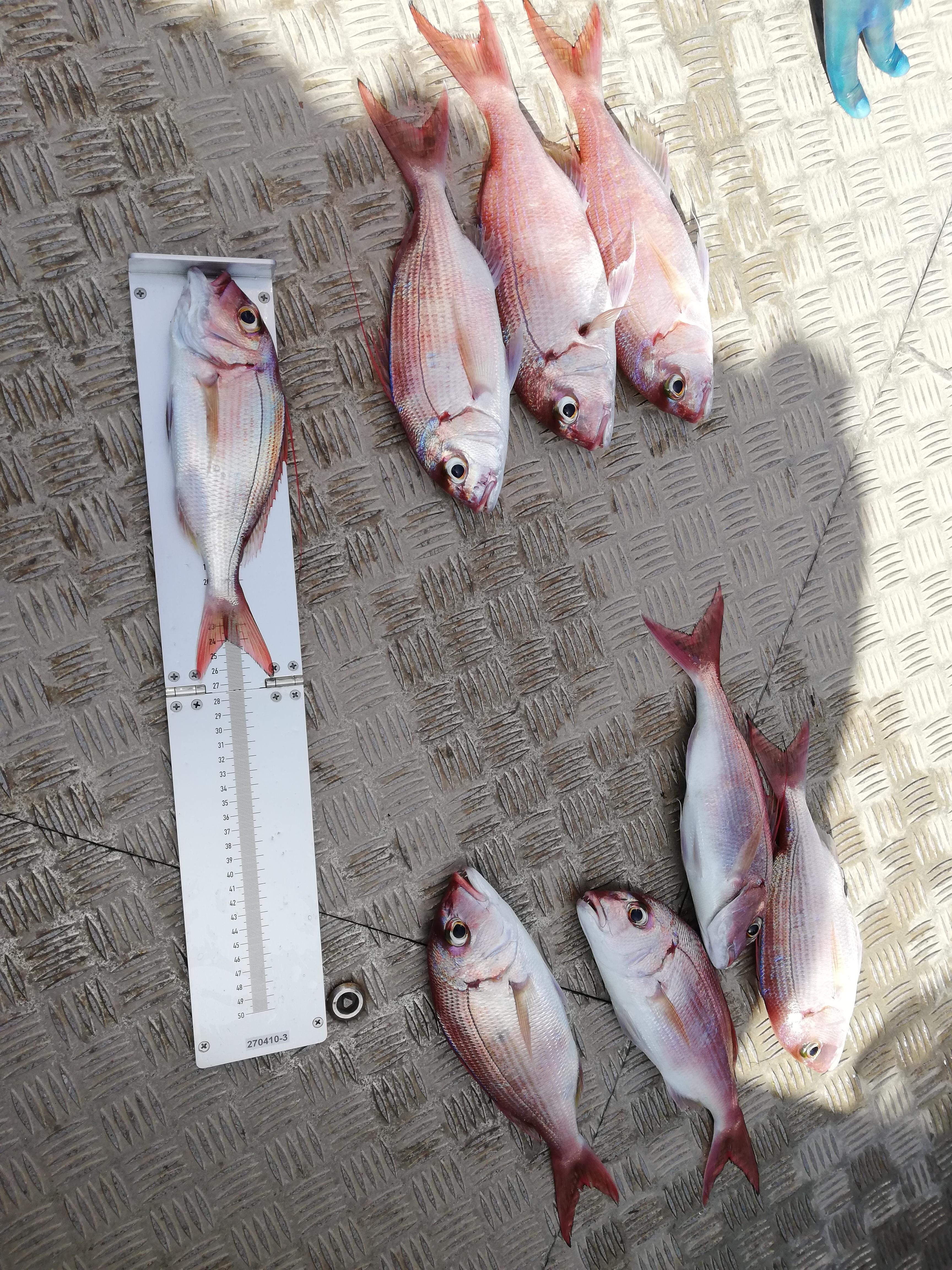 Pescado incautado por la Inspección Pesquera / CanariasNoticias.es
