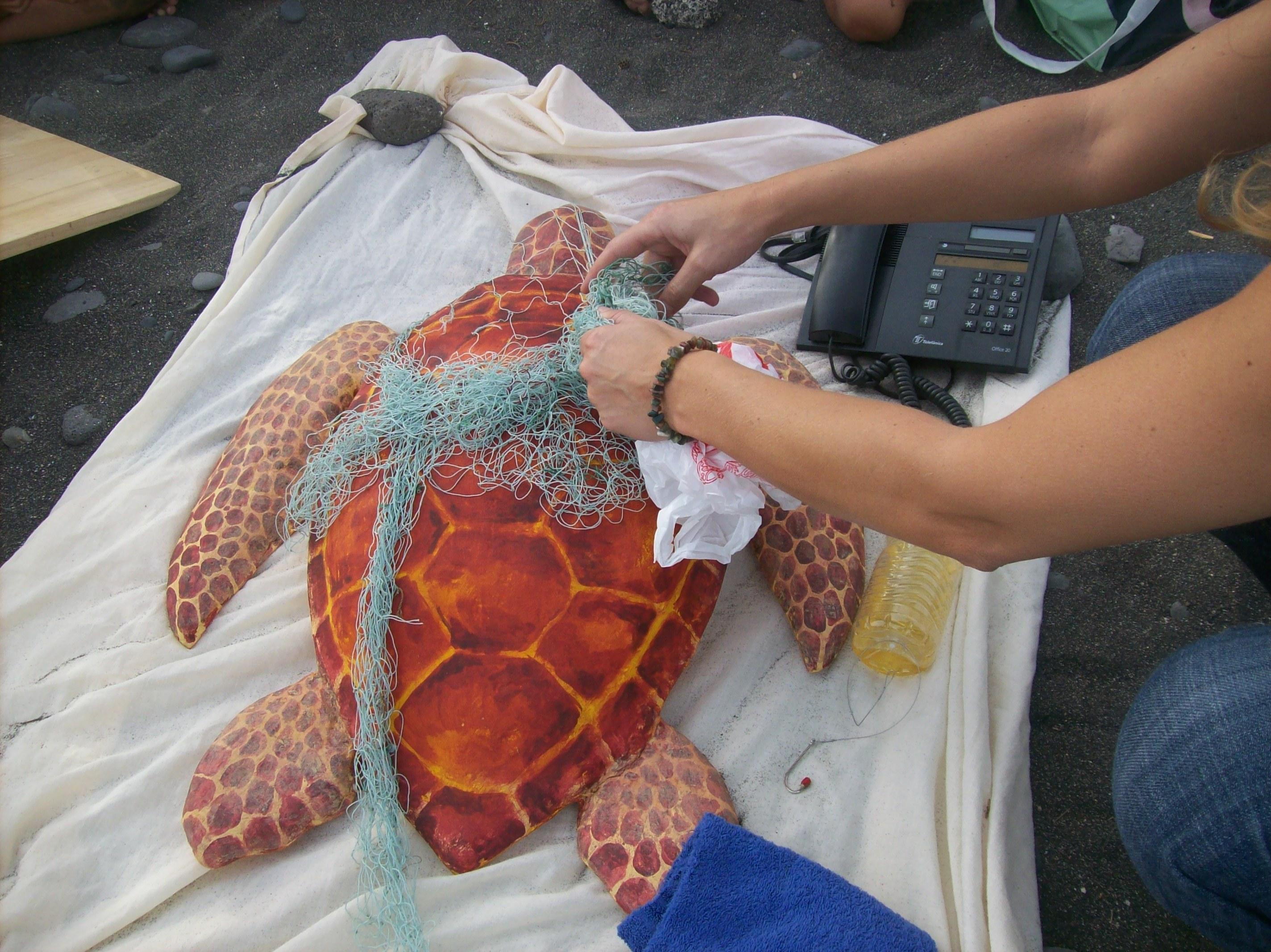 Rescate de tortuga marina