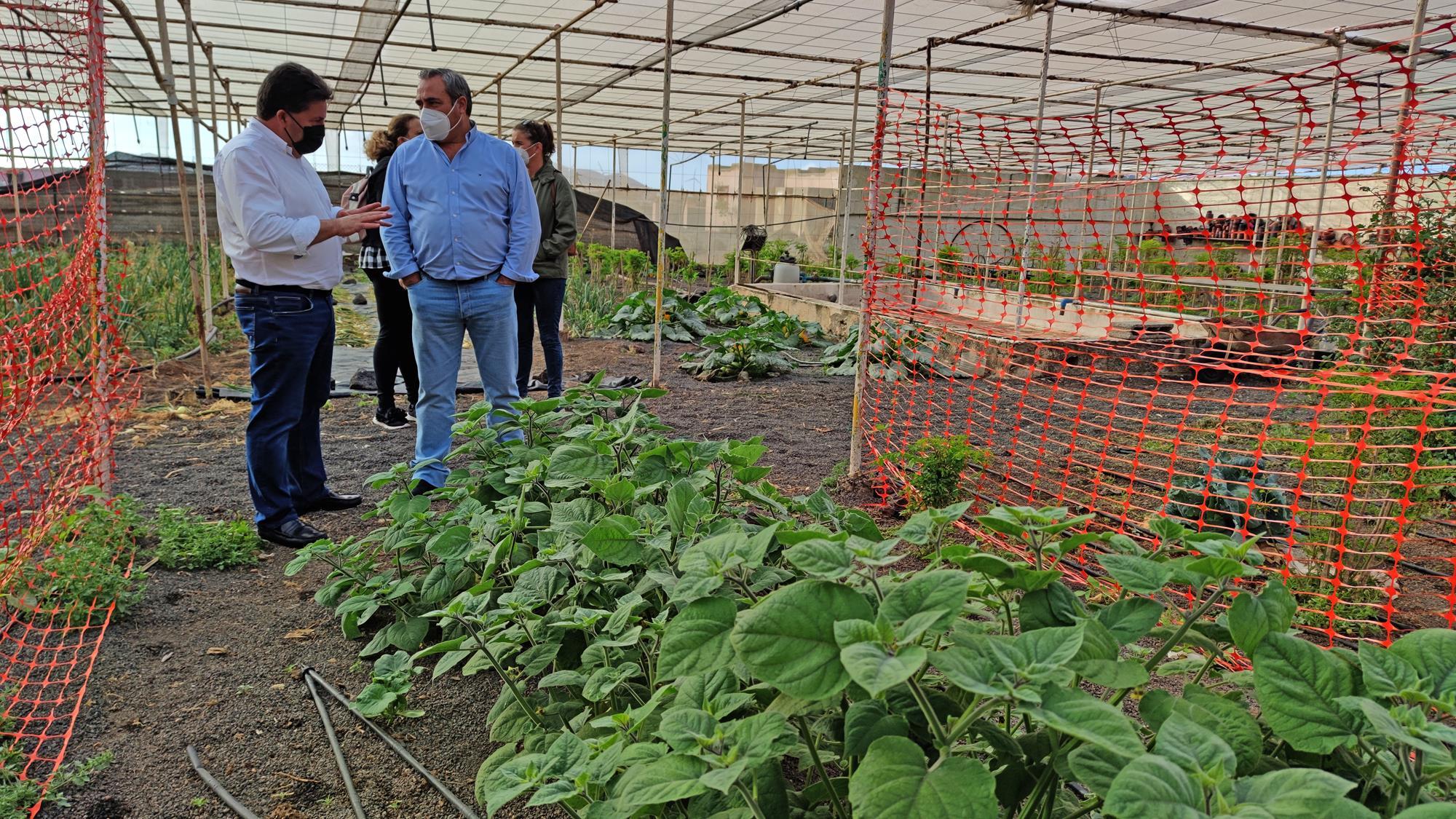 Lanzarote fomenta el cultivo de las fresas / CanariasNoticias.es