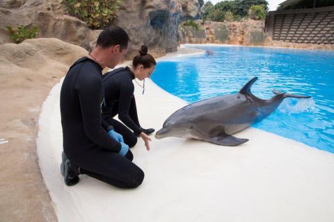 Cuidadores con delfines en Loro Parque