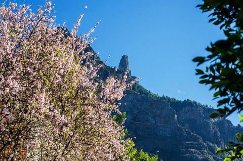Primavera en Canarias