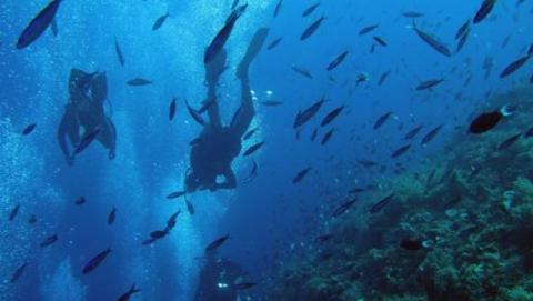 Buceadores y peces en el mar