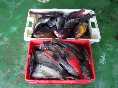 Incautación de pesca ilegal