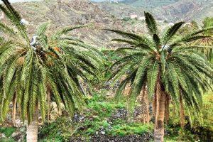 Guaraperos subidos a una palmera