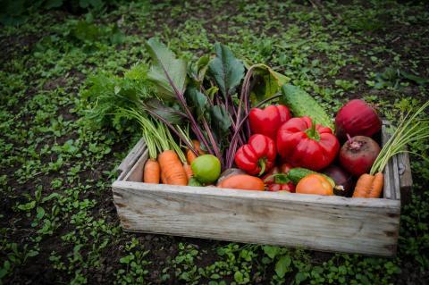 Verduras en un cesta en el campo