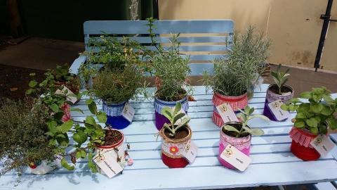 Macetas con plantas