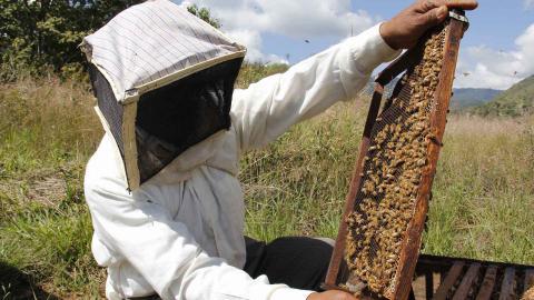 Un apicultor con panal de abejas