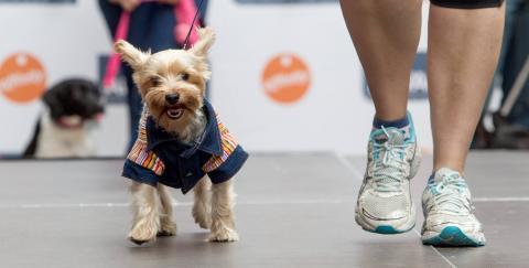Un perro en un desfile canino