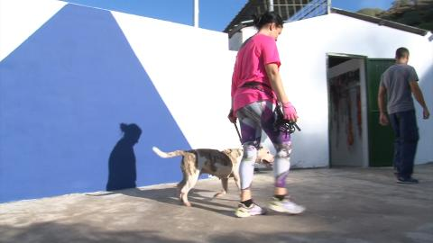 Voluntaria pasea a un perro en el albergue