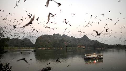 Murciélagos en Birmania