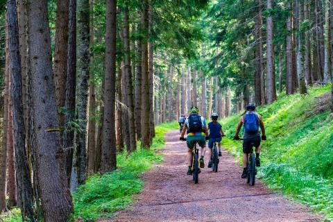 e-bikes en un bosque